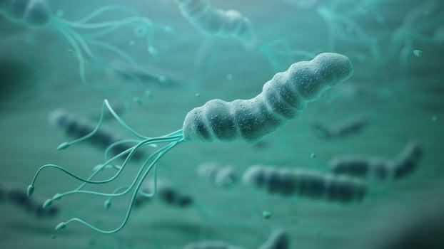 sintomi da infezione da helicobacter pylori
