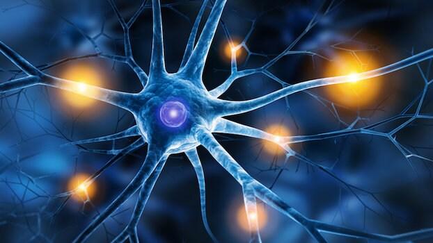 Serotonina Che Cos E E Come Funziona Saperesalute It